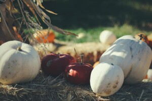 Pumpkin Patches | Boulder